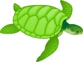 valessiobrito-Green-sea-turtle